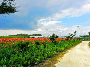 花畑と風車.png